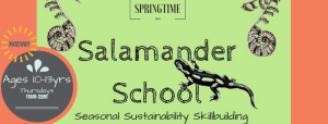 salamander_school_cover_photo